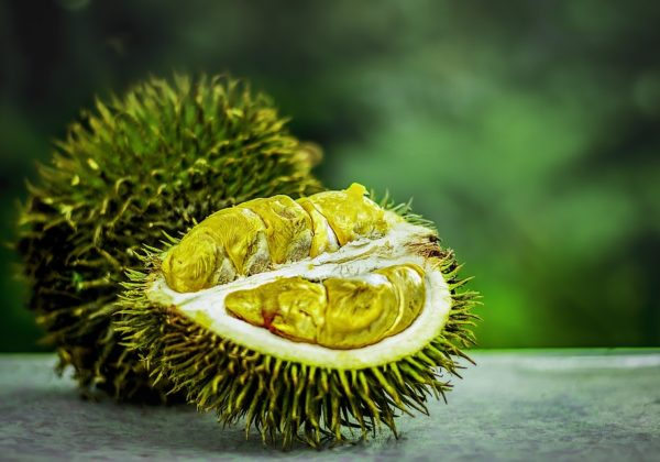 Karakteristik Durian Tembaga di Indonesia